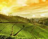Sri-Lanka-Erlebnisreise-Sonnenuntergang