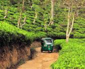 Sri-Lanka-Erlebnisreise-Tuk-Tuk