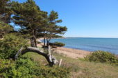 estland-aktivreise-strand-baum-meer
