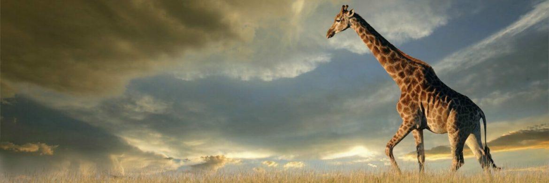 Ranger Kurs - EcoTraining in Südafrika und Botswana 28 Tage