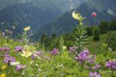 Georgien-Osterreise-wilde-Blumenwiese
