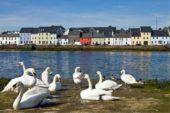 irland-wanderreise-schwan-sonne