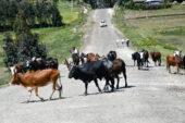 äthiopien-wanderreise-straße