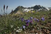 Armenienreise-kaukasus-berglandschaft