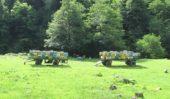 Georgien-Wanderreise-Bienenstöcke-Tuschetien