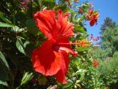 Nordzypern-Wanderreise-Blumenmeer