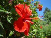 Nordzypern-Silvesterreise-Blume