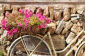 mallorca-wanderreise-calafiguera-blumen