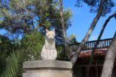 mallorca-wanderreise-calafiguera-hund
