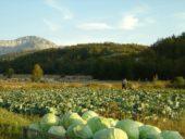 Montenegro-Reise: Wanderurlaub
