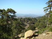 Südzypern-Wanderreise-Wald
