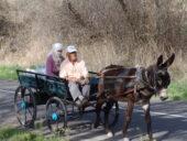 Türkei-Wanderreise-Einheimische-Esel