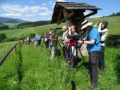 Slowakei-Wanderreise-Tierbeobachtungen