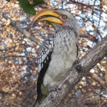 Namibia-Erlebnisreise-Vogel