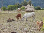 äthiopien-wanderstudienreise-tiere-natur
