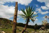 Äthiopien-Wanderstudienreise-Flora