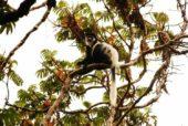 Äthiopien-Individualreise-Affe