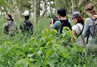 Ranger Kurs - EcoTraining in Südafrika 28 Tage