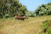 Individualreise-Äthiopien-Warzenschwein