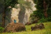 Äthiopien-Wanderstudienreise-Die-bunte-Vogelwelt-des-Tanasees