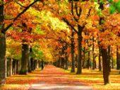 Spaziergang, Estland, Herbst