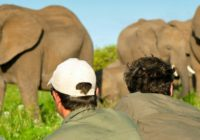 Ranger-Kurs: EcoTraining im Borana Camp / Mara Training Center Kenia 28 Tage