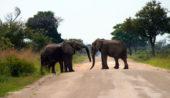 Namibia-Erlebnisreise-Elefanten