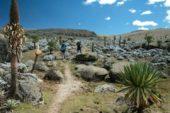 Äthiopien-Individualreise-Wandern-im-Bale-Mountain-Nationalpark