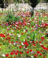 tuerkei-wanderreise-blumen-flora-natur