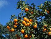 Reise Nordzypern: Flora und Fauna