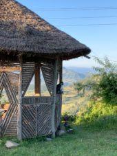 äthiopien-wanderreise-tierisch-affe