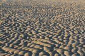 Niederlande-wanderreise-strand