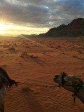 Jordanien Reise: Wadi Rum