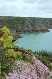 England-Wanderreise-Cornwall-Flora-Fauna-Land's End