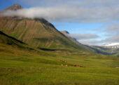 Island-Wander- und Erlebnisreise-Trollaskagi-Nord-Island