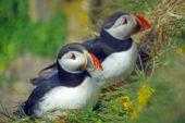 Reise Sud Insel Island: Wanderurlaub