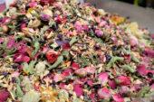 Iran-wanderreise-rosenblüten