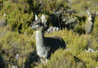 Äthiopien Individualreise - Wandern im Bale Mountains Nationalpark