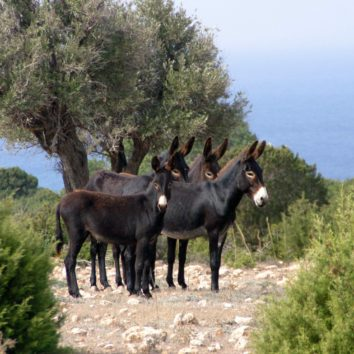 Nordzypern-Silvesterreise-Esel