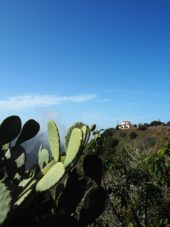 Kanaren-Wanderreise-La Gomera-Natur-Las Hayas