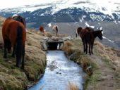 Spanien-Wanderreise-Pferde