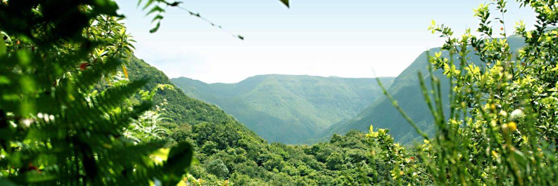 Madeira Wanderreise - Mit steilen Küsten und einer teils unvermutet wilden Berglandschaft thront Madeira über dem tiefblauen Atlantik.