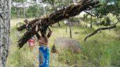 Erlebnisreise-Malawi-Frau-Einheimische