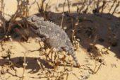Namibia-Erlebnisreise-Chamäleon
