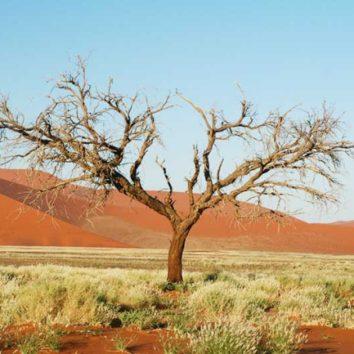 Namibia-Erlebnisreise-Sossusvlei-Baum