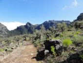 Spanien-Wanderreise-Olivenbäume