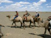 Mongolei-Erlebnisreise-Kamele-Gobi