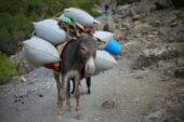 Usbekistan-Erlebnisreise-Packesel-Berge