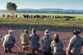 Ranger-Ausbildung-Südafrika-Tierbeobachtung