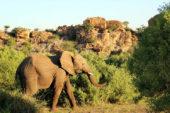 Ranger-Ausbildung-Südafrika-Elefant